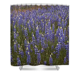 Lupines Shower Curtain by Doug Herr