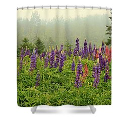 Lupins In The Mist Shower Curtain