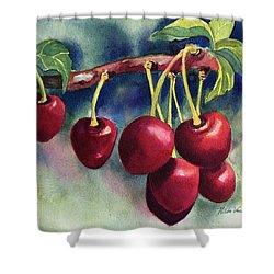 Luscious Cherries Shower Curtain