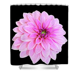 Luscious Layers Of Pink Beauty Shower Curtain