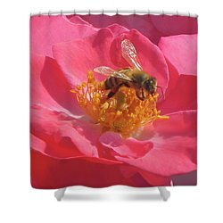 Shower Curtain featuring the photograph Luscious Rose With A Bee by Nancy Lee Moran