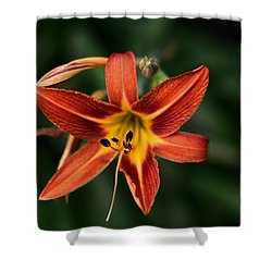 Luscious Tiger Lily Shower Curtain