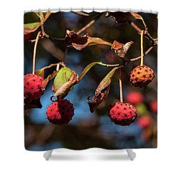 Lychees Shower Curtain