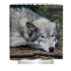 Shower Curtain featuring the photograph Lying In Wait by Laddie Halupa