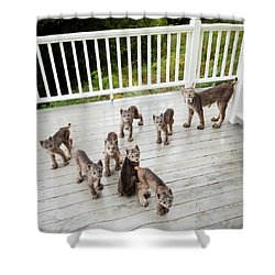 Lynx Family Portrait Shower Curtain