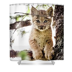Lynx Kitten In Tree Shower Curtain