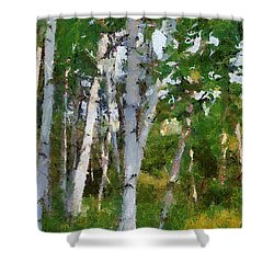 M-22 Birches Shower Curtain