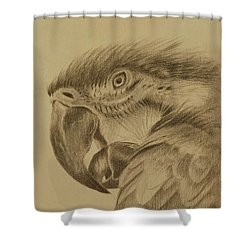 Macaw Shower Curtain by Lynn Hughes