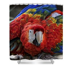 Macaw Parrot Shower Curtain by Mitch Shindelbower