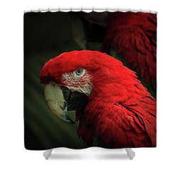 Macaw Portrait Shower Curtain