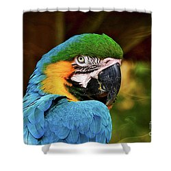Macaw Portrait Shower Curtain by Kathy Baccari