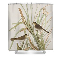 Macgillivray's Finch  Shower Curtain by John James Audubon