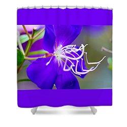 Macro Clematis Shower Curtain by Warren Thompson