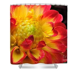 Macro Dahlia Shower Curtain