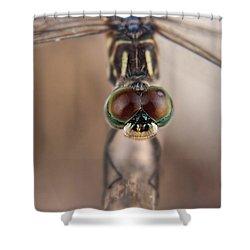 Macro Dragonfly Shower Curtain