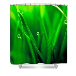 Macro Image Of Fresh Green Grass Shower Curtain