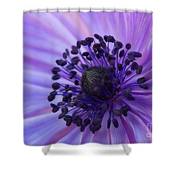 Macro Of Lavender Purple Anemone Shower Curtain