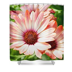 Macro Pink Cinnamon Tradewind Flower In The Garden Shower Curtain