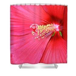 Macro Red Hibiscus Shower Curtain