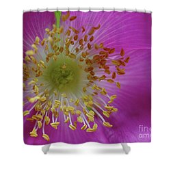 Macro Rosehip Bloom Shower Curtain by Baggieoldboy