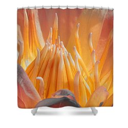 Macro Water Lily Shower Curtain
