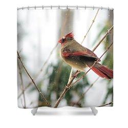 Madam Cardinal Shower Curtain