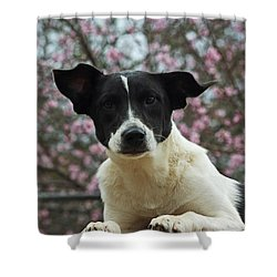 Madison In Spring Shower Curtain