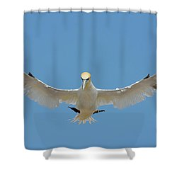 Maestro Shower Curtain by Tony Beck