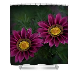 Shower Curtain featuring the photograph Magenta African Daisies by David and Carol Kelly