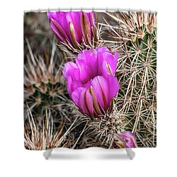 Magenta Cactus Flowers Shower Curtain