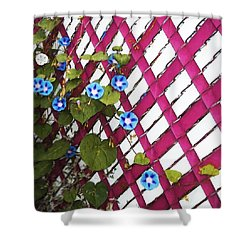 Shower Curtain featuring the photograph Magenta Chain-link by Shawna Rowe