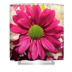Magenta Chrysanthemum Shower Curtain