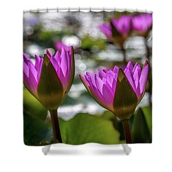 Magenta Water Lilies Shower Curtain