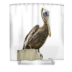 Majestic Gulf Shores Pelican 1071a Shower Curtain