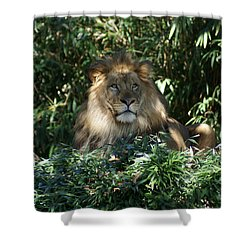 Magestic Lion Shower Curtain