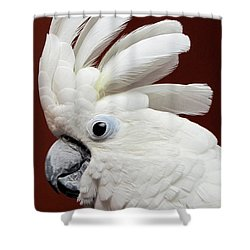Maggie The Umbrella Cockatoo Shower Curtain