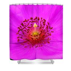 Magic Magenta - Calandrinia Shower Curtain