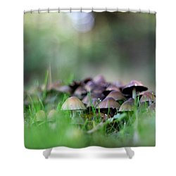 Magic Mushrooms 3 Shower Curtain