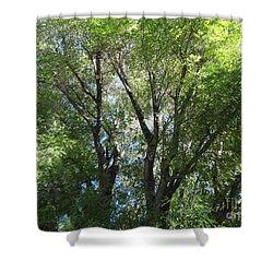 Magic Of Komorebi - Whole Shower Curtain