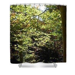 Shower Curtain featuring the photograph Magical Forest Beginning Of Fall by Irina Sztukowski