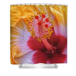 Magical Hibiscus  Shower Curtain