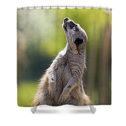 Magical Meerkat Shower Curtain