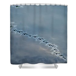 Magical Tundra Swan Fly-over Shower Curtain