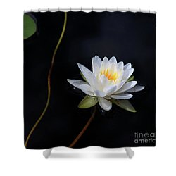 Magical Water Lily Shower Curtain