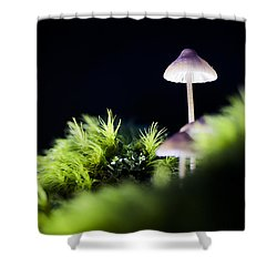 Magical World Of Mushrooms Shower Curtain