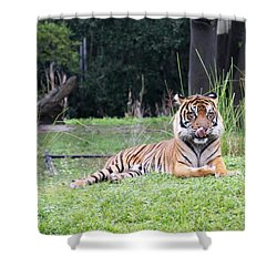 Shower Curtain featuring the photograph Magnificent Creature by Vadim Levin