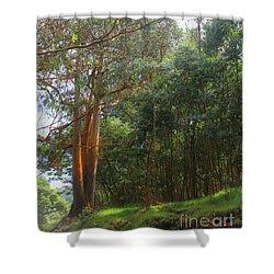 Shower Curtain featuring the photograph Magnificent Maui by DJ Florek