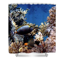 Magnificent Red Sea World Shower Curtain