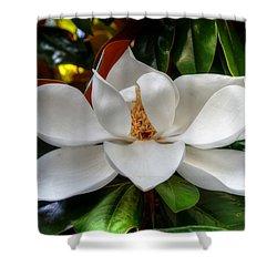 Magnolia Bloom Shower Curtain by Ronda Ryan