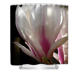 Magnolia Bloom Shower Curtain by Baggieoldboy